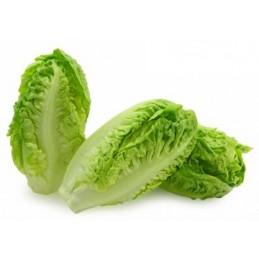 Little Gem Lettuce x 3